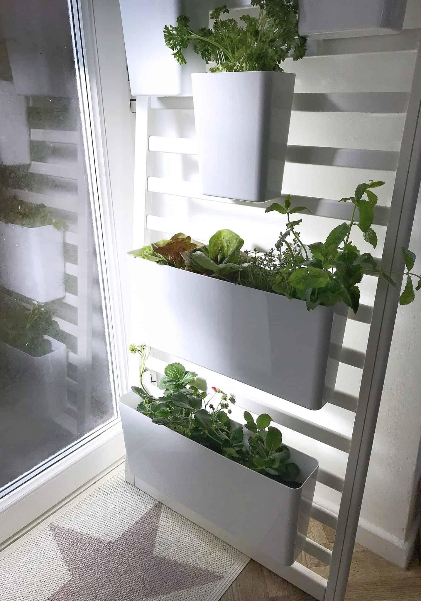 How to make an indoor salad garden