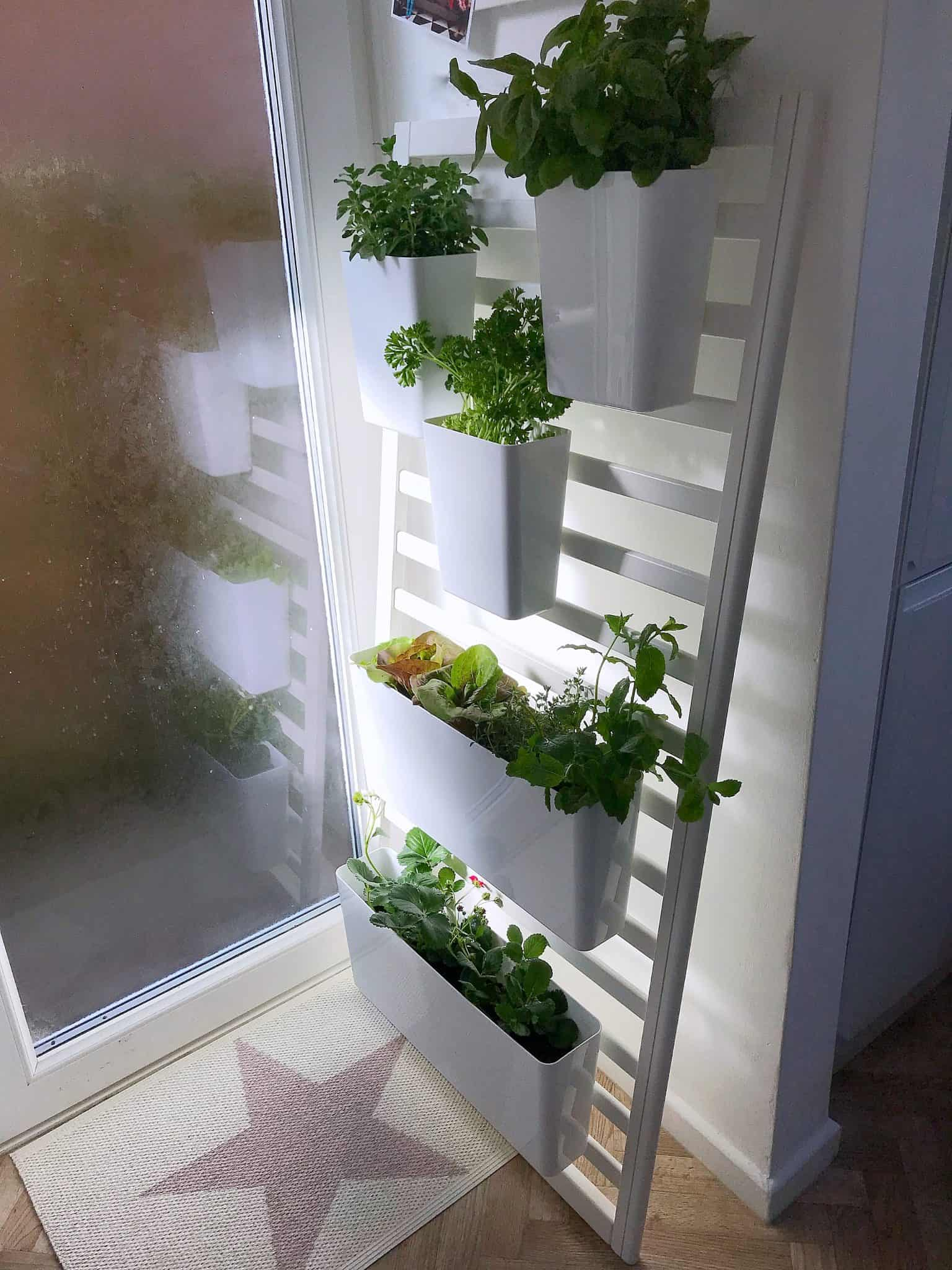 Upcycled Cot Side made in to an Indoor Edible Garden
