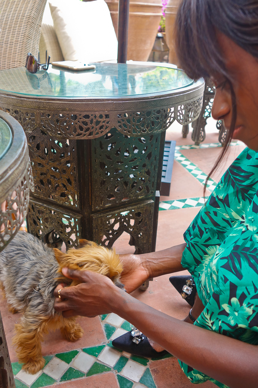 Making friends at La Mamounia hotel, Marrakech