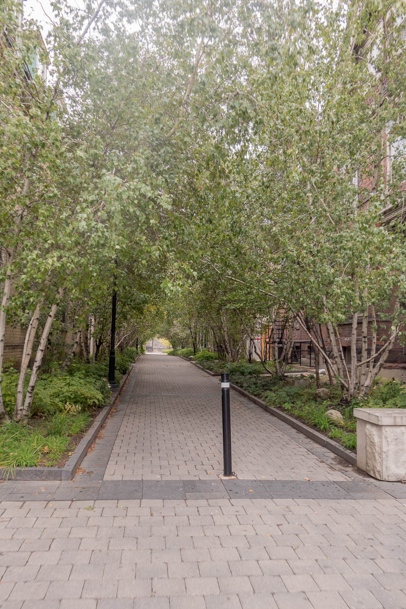 Avenue of trees, University of Toronto