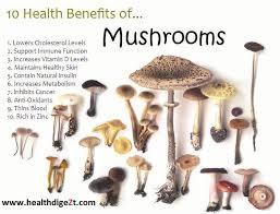 mushroom3