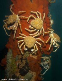 crab encrusted pylon