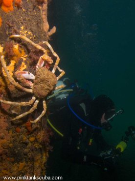 crab on pylon with diver