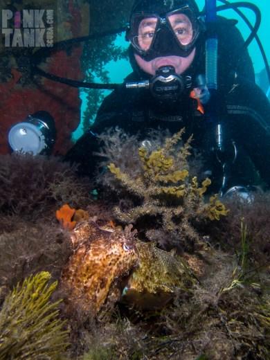 LOGO Cuttlefish and David R