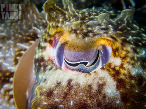 LOGO Colourful Cuttle Eye
