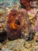 LOGO Octopus Purple and Light Side On