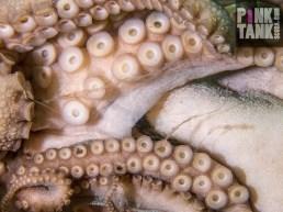 LOGO Octopus Tentacles Close Up