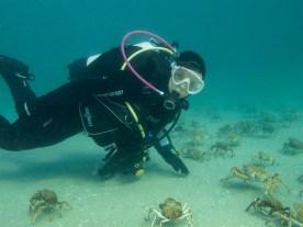 Credit Mark Jones Image PT 1 and Spider Crabs copy