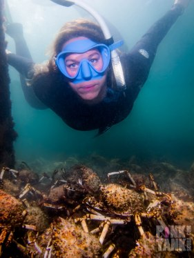 LOGO Freediver Sam with Spider Crabs