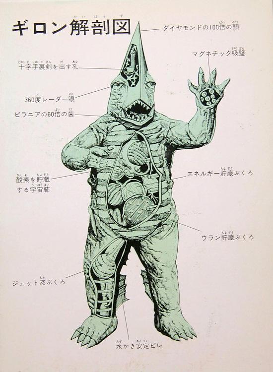 Guiron anatomical illustration --