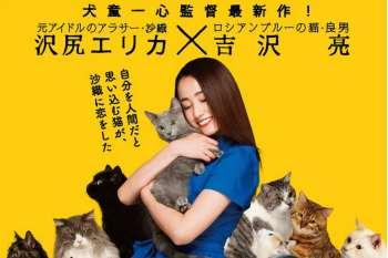 """【日影】猫咪""""吉澤亮""""在主人澤尻英龍華的身邊默默守候~ 電影『貓咪是要抱著的』特報映像公開~(內附影片)"""