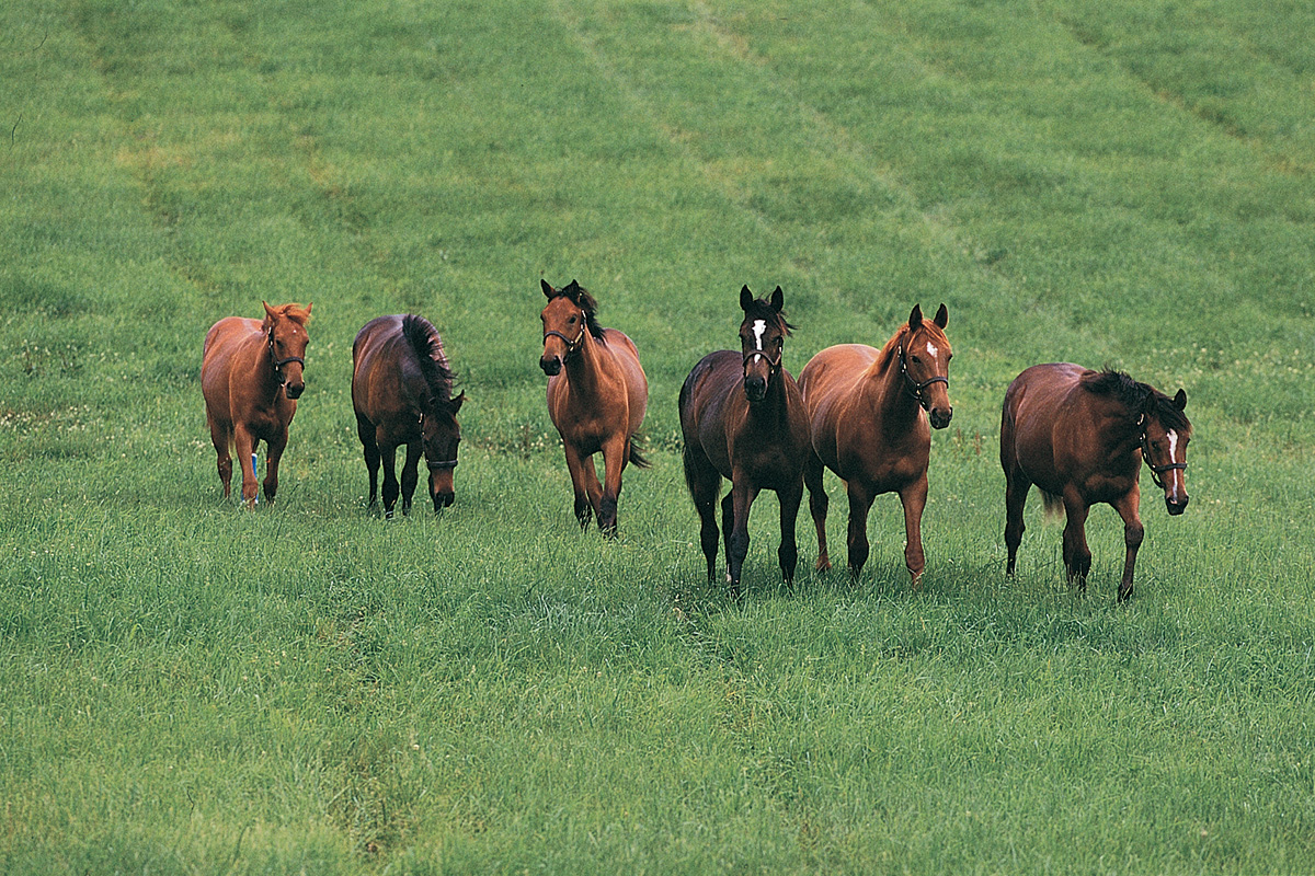 Yearling Fillies