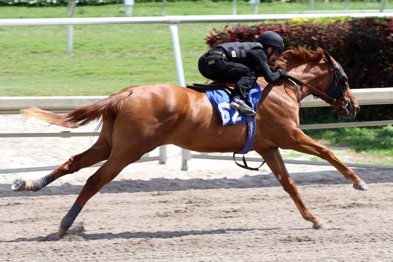 $300,000 BROKEN VOW 2YO at Gulfstream Sale