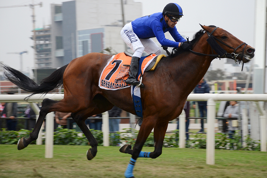 SENSACIONALE Becomes Newest Graded Stakes Winner