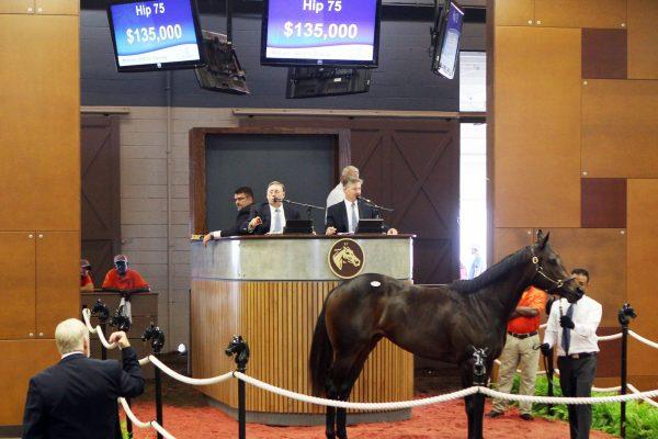 $135,000 2YO at Fasig-Tipton Midlantic