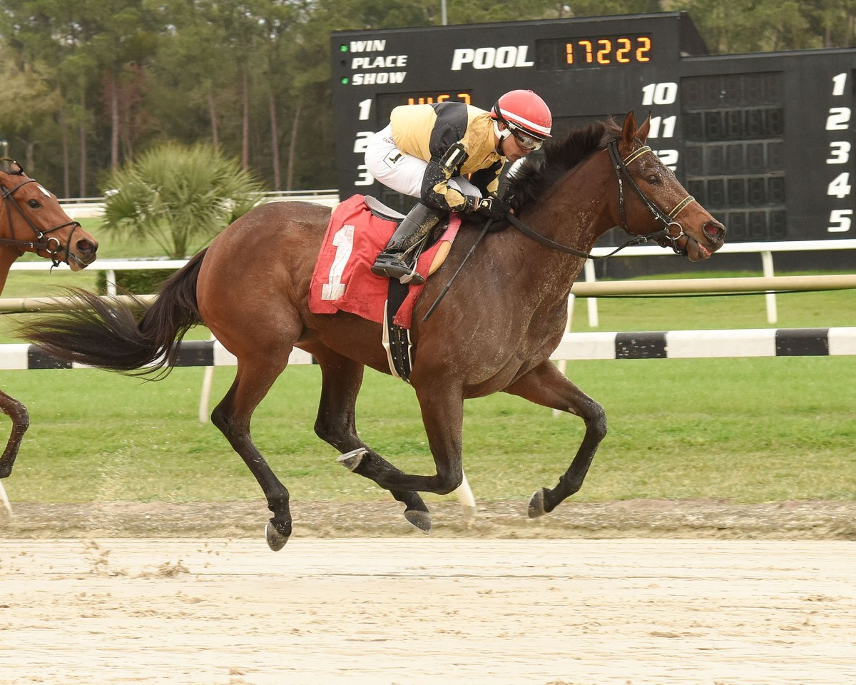 3YO SWEET ALTERNATIVE Rallies to Win Maiden Special at Tampa