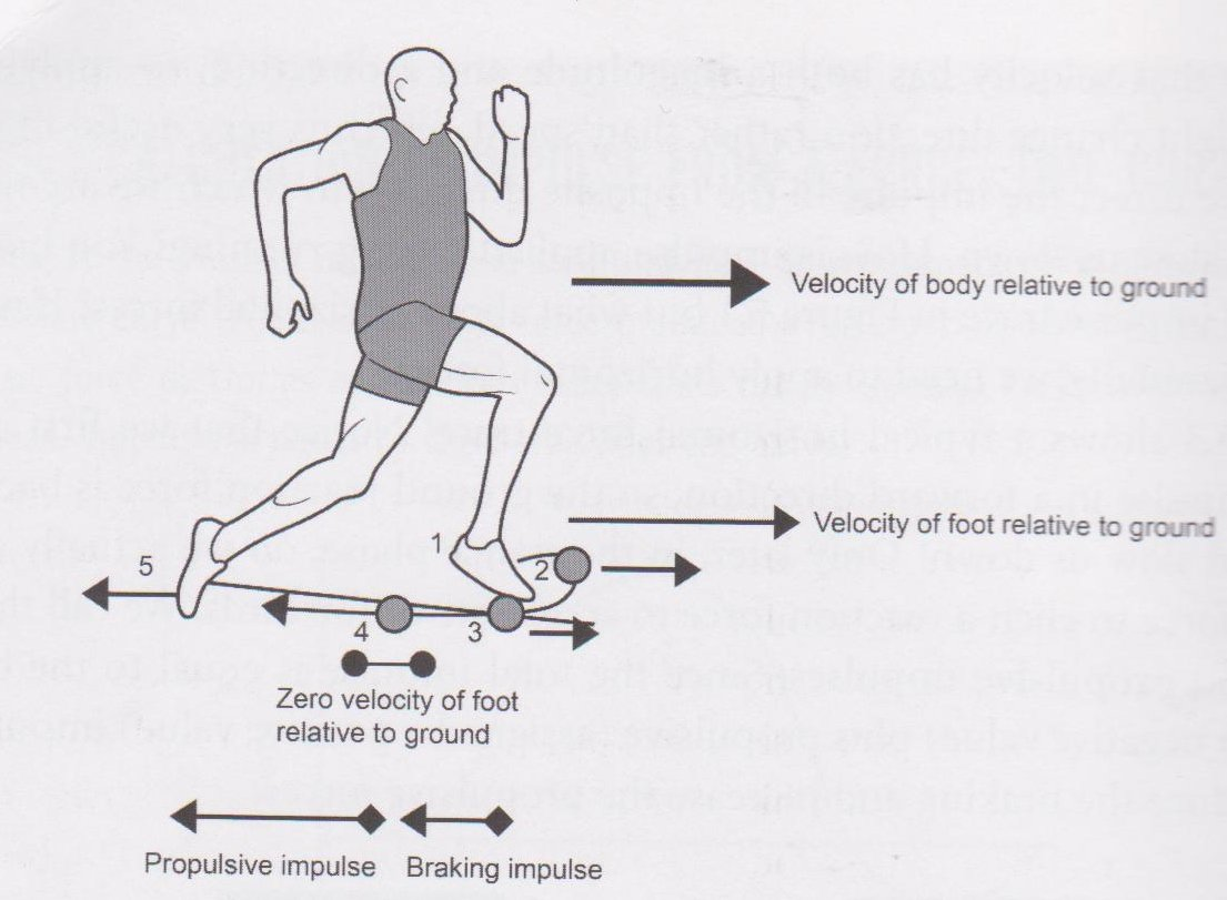 Foot Strike And Force Application How To Run Faster