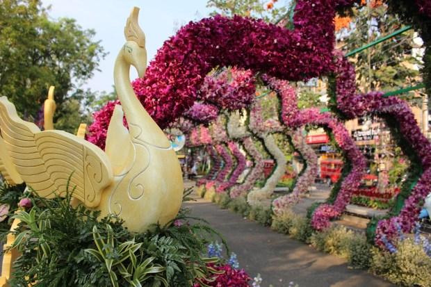 fete-des-fleurs-chiang-mai (1)