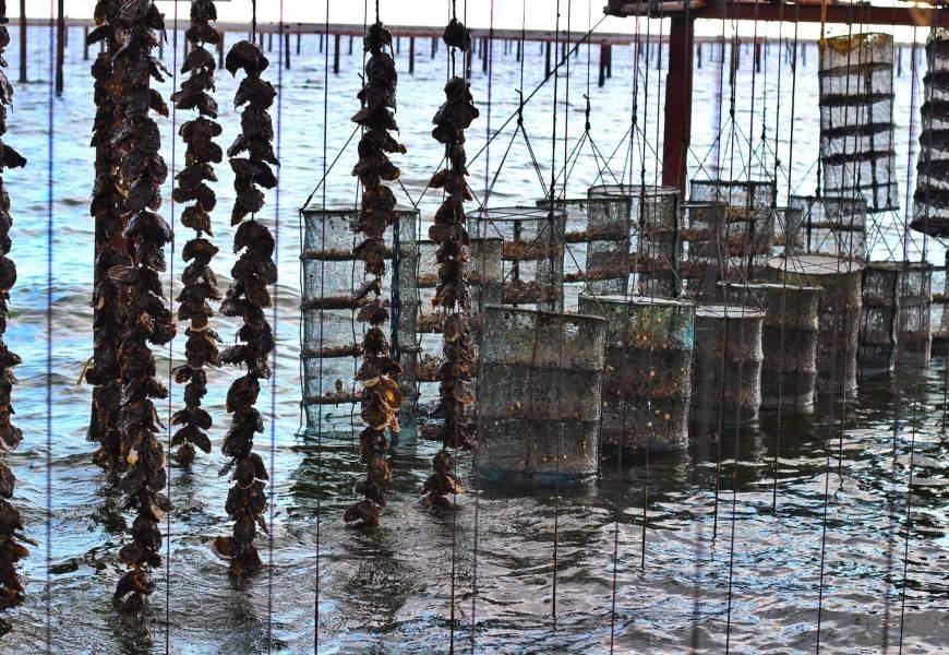 Lagune de Thau // Les huîtres Rouzières, ostréiculteurs de père en fils