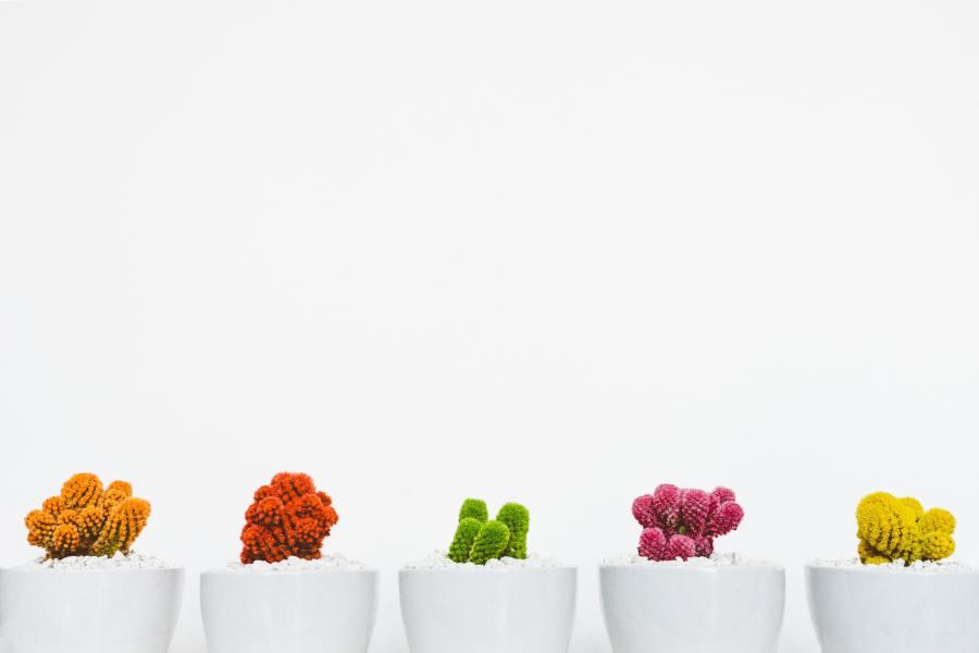 Ini 5 Cara Merawat Kaktus Dengan Mudah Untuk Pemula