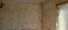 Aceite de linaza en techos y paredes (4)
