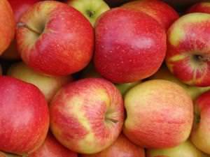 Спелые яблоки чемпион