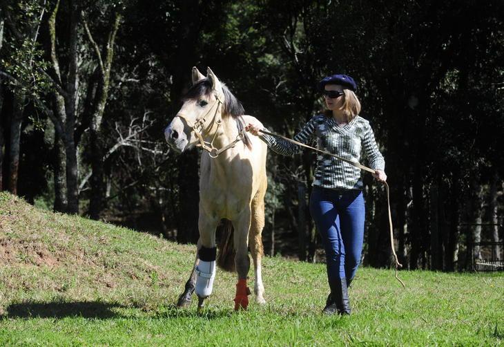 O equino é da raça Crioula:imagem 3