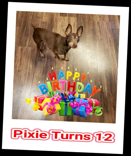Pixie Turns 12 years old