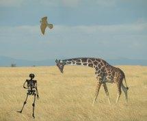 Content-giraf