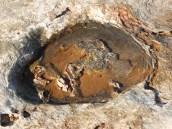 Fossilised Dinosaur Footprint