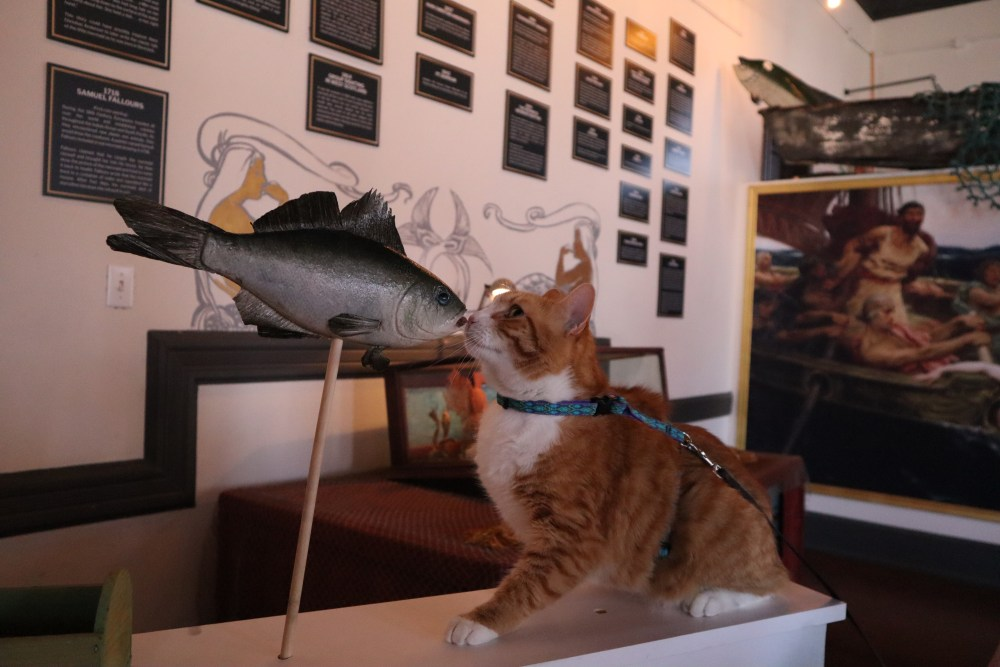 Pip the Beach Cat sniffs a fish stick at the Mermaid Museum in Berlin Maryland