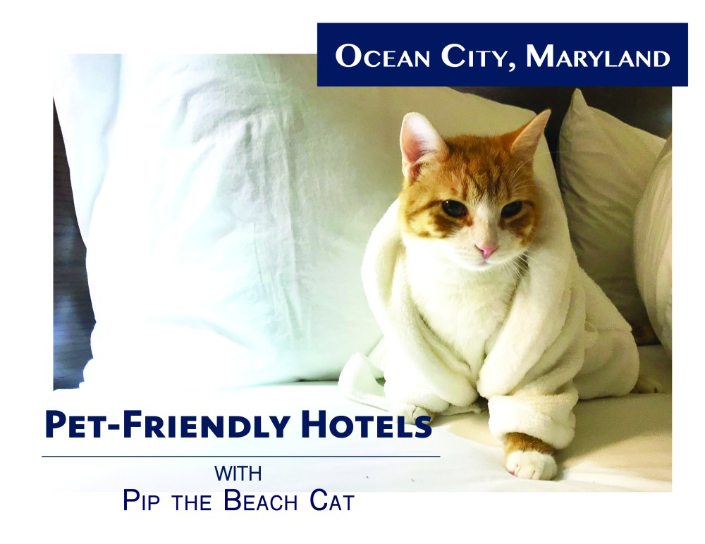Pet Friendly Hotels