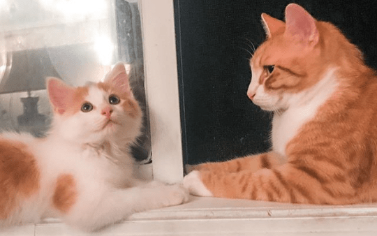 Pip the Beach Cat looks on at his first ever foster kitten, Oliver, on their windowsill. Since Oliver, Pip has fostered over 30 cats and kittens.