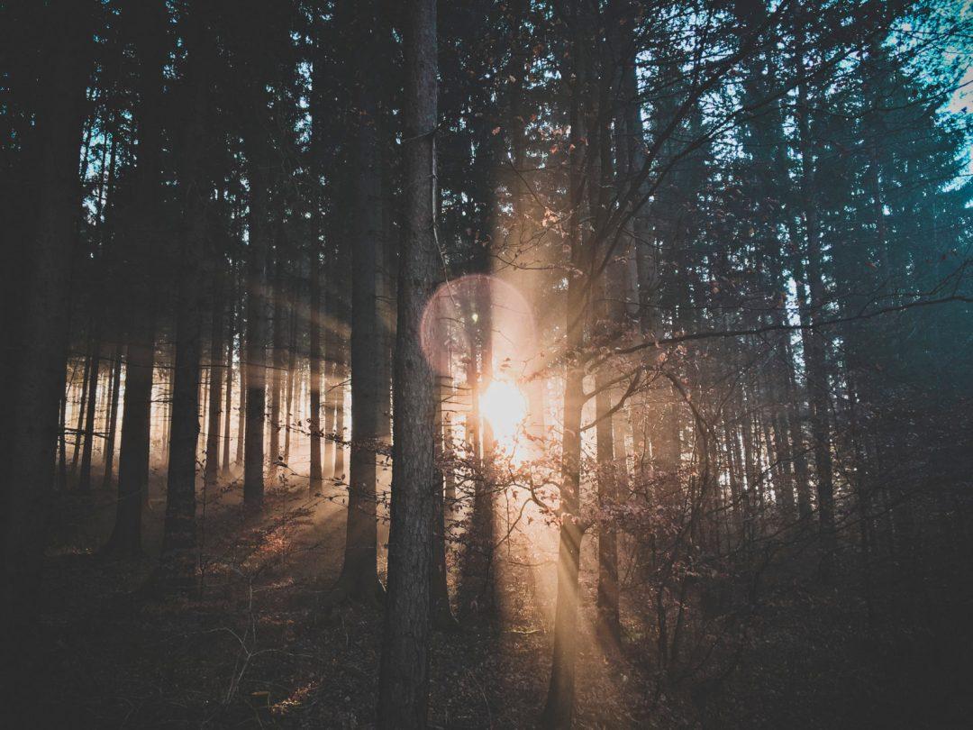 Photographie d'une forêt