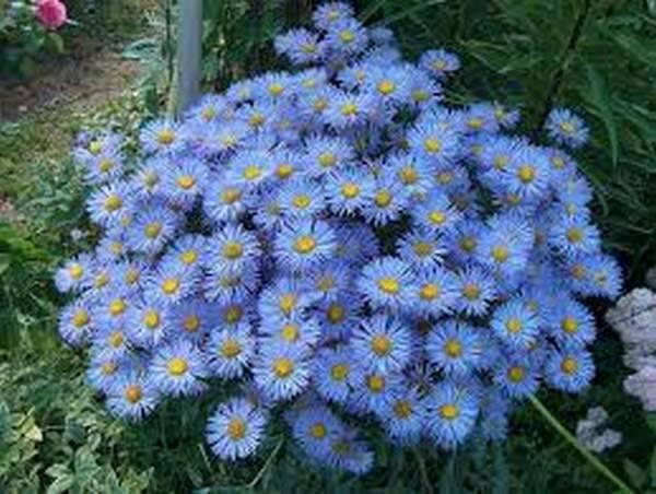 Фото многолетники цветущие все лето – фото с названиями ...