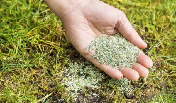 Как правильно посеять газонную траву своими руками видео ...