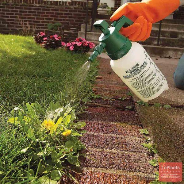 Посеять газон своими руками: Как сеять газонную траву ...