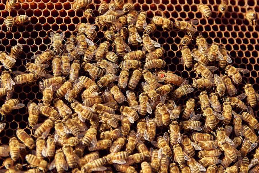 pattern honeycomb bee pollen