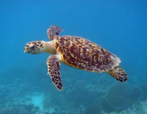 Similan Scuba diving