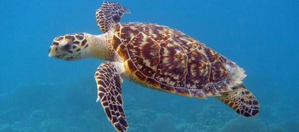 Diving Course Similan Islands