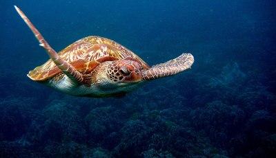 Advise Similan Islands khao lak