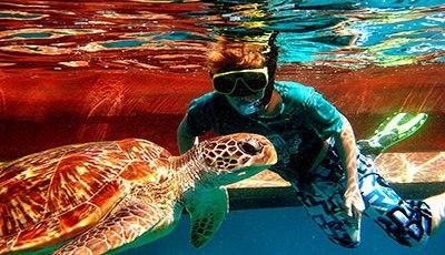 Snorkeler with Turtle - similan islands