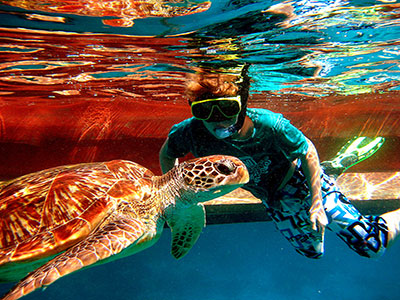 Snorkeler with Turtle - similan islands