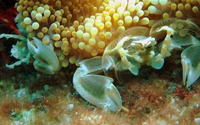 Richelieu rock diving