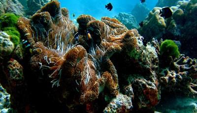 similan-diving