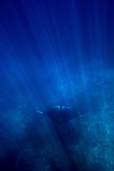 Diving the Similan Islands