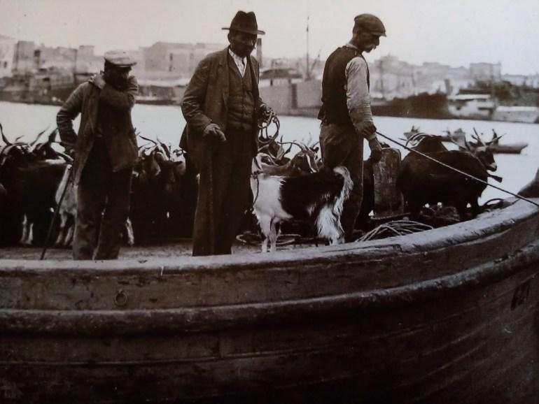 Πλωτά μέσα παντός τύπου κατέφταναν στον Πειραιά γεμάτα από ζώα προς σφαγή που συνοδεία των κτηνοτρόφων που τα μετέφεραν πήγαιναν στα Σφαγεία του Πειραιά