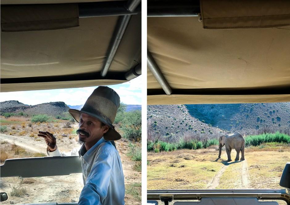 safari-10
