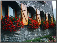Flor en la fachada del Hotel Abetos