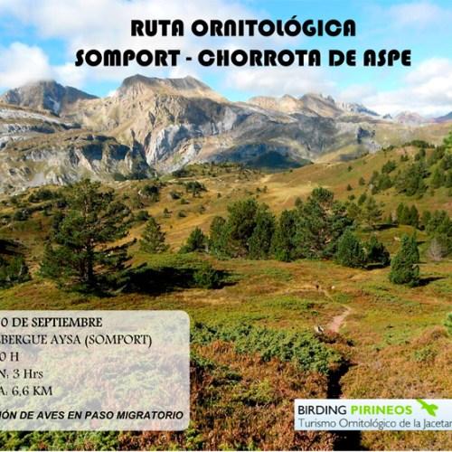 cartel-ruta-ornitológica-30sept[1]